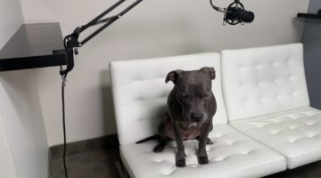 better business podcast co host mika the dog getting ready for the episode
